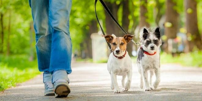 Imagen de archivo de una persona paseando a sus perros.